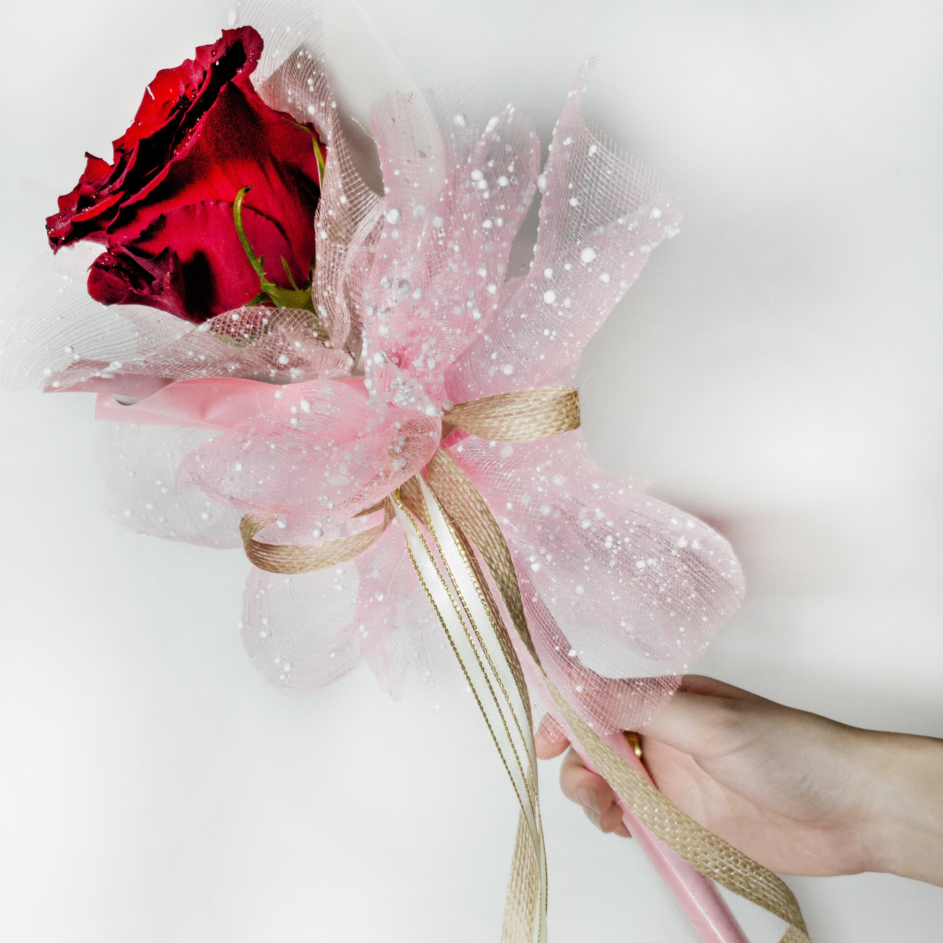 Fairy Wand - Freeland Floral 自由花苑